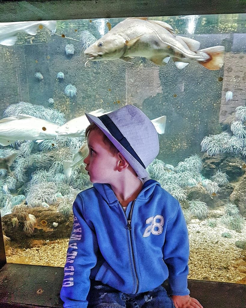 Boy in front of aquarium by Someone's Mum