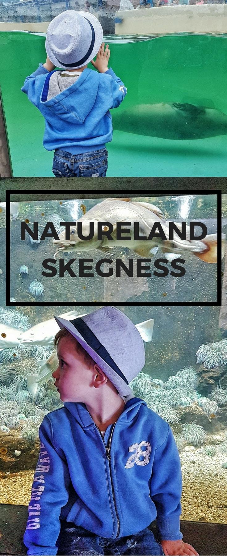 Natureland Skegness Seal and Wildlife Sanctuary