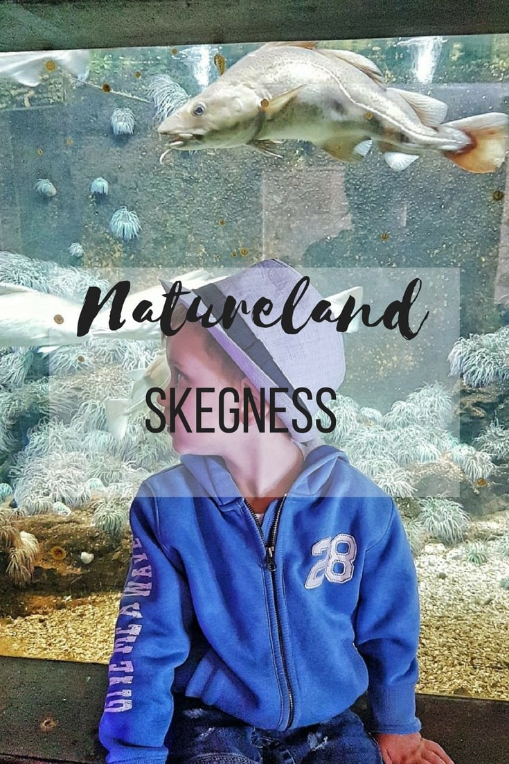 Natureland seal and wildlife sanctuary in Skegness - a review.