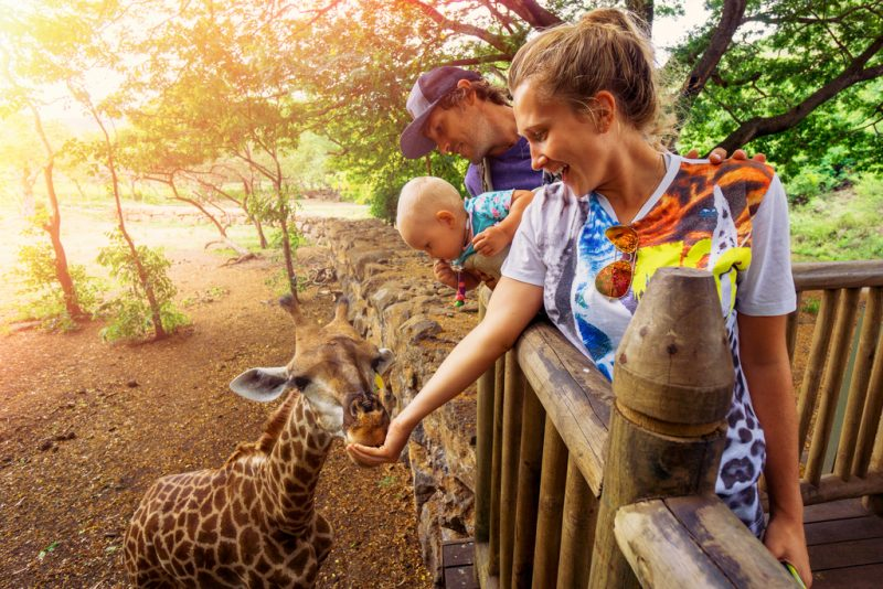 Feeding Giraffes at Casela Safari Park