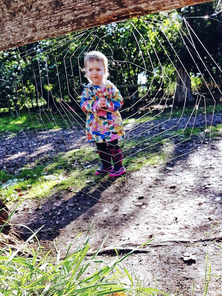 Persil wild explorers - spider web