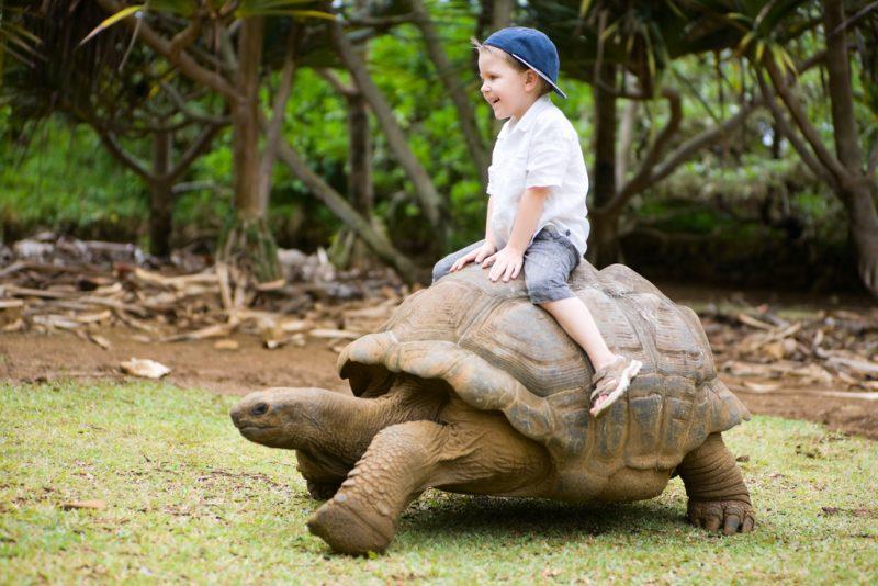 Boy on tortoise Mauritius