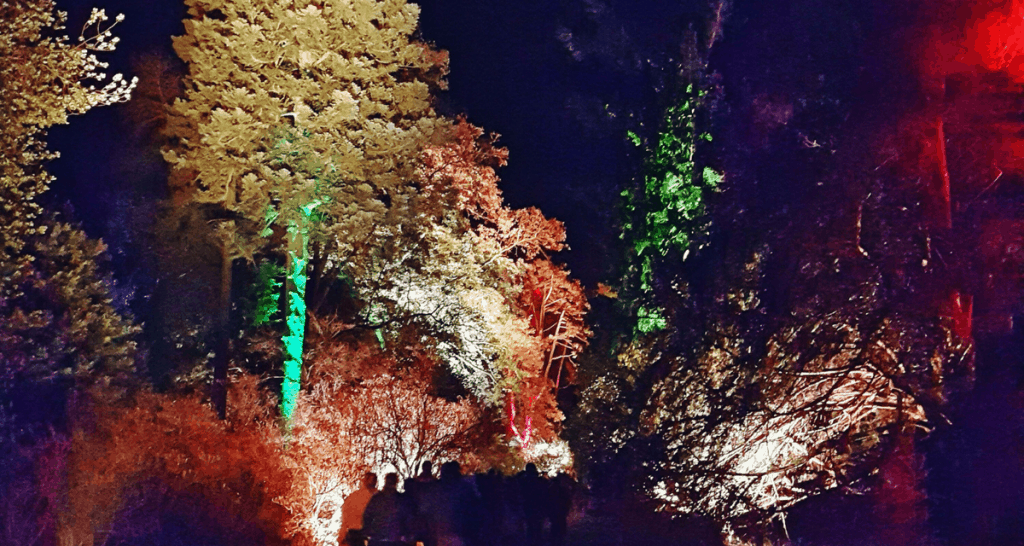 Enchanted Christmas illuminations at Westonbirt Arboretum