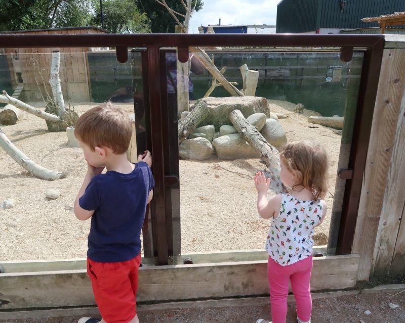 Meerkats at All Things Wild Evesham