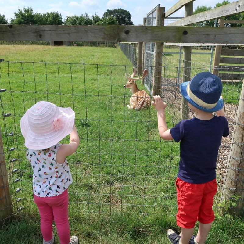 The children look at some deer at All Things Wild Evesham