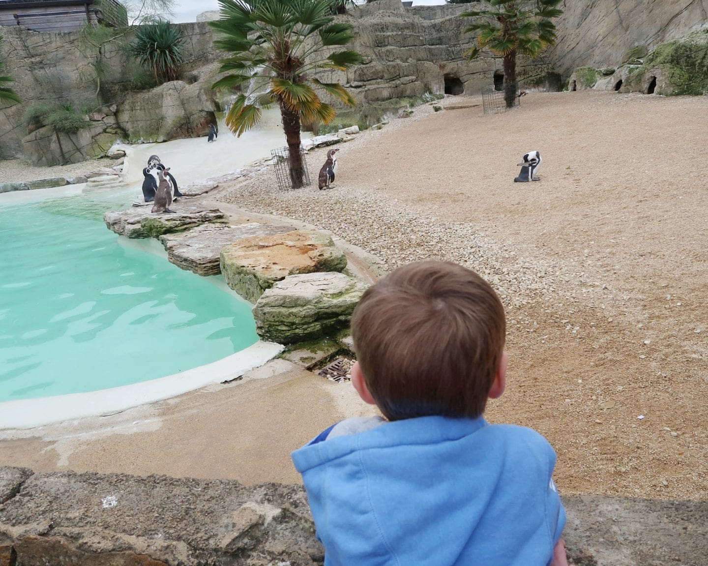 Penguins at Cotswold Wildlife Park