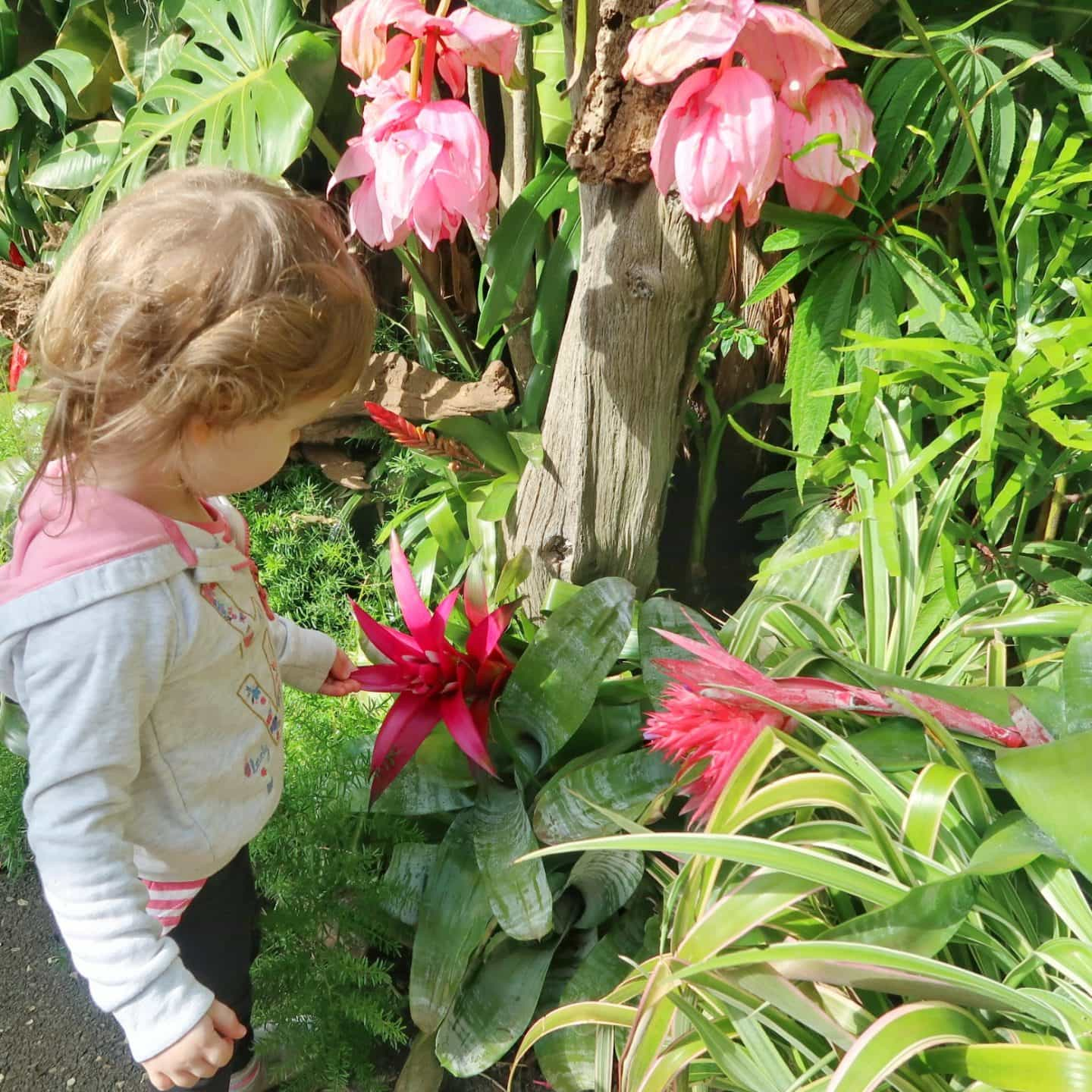 Exotic flowers at Cotswold Wildlife Park