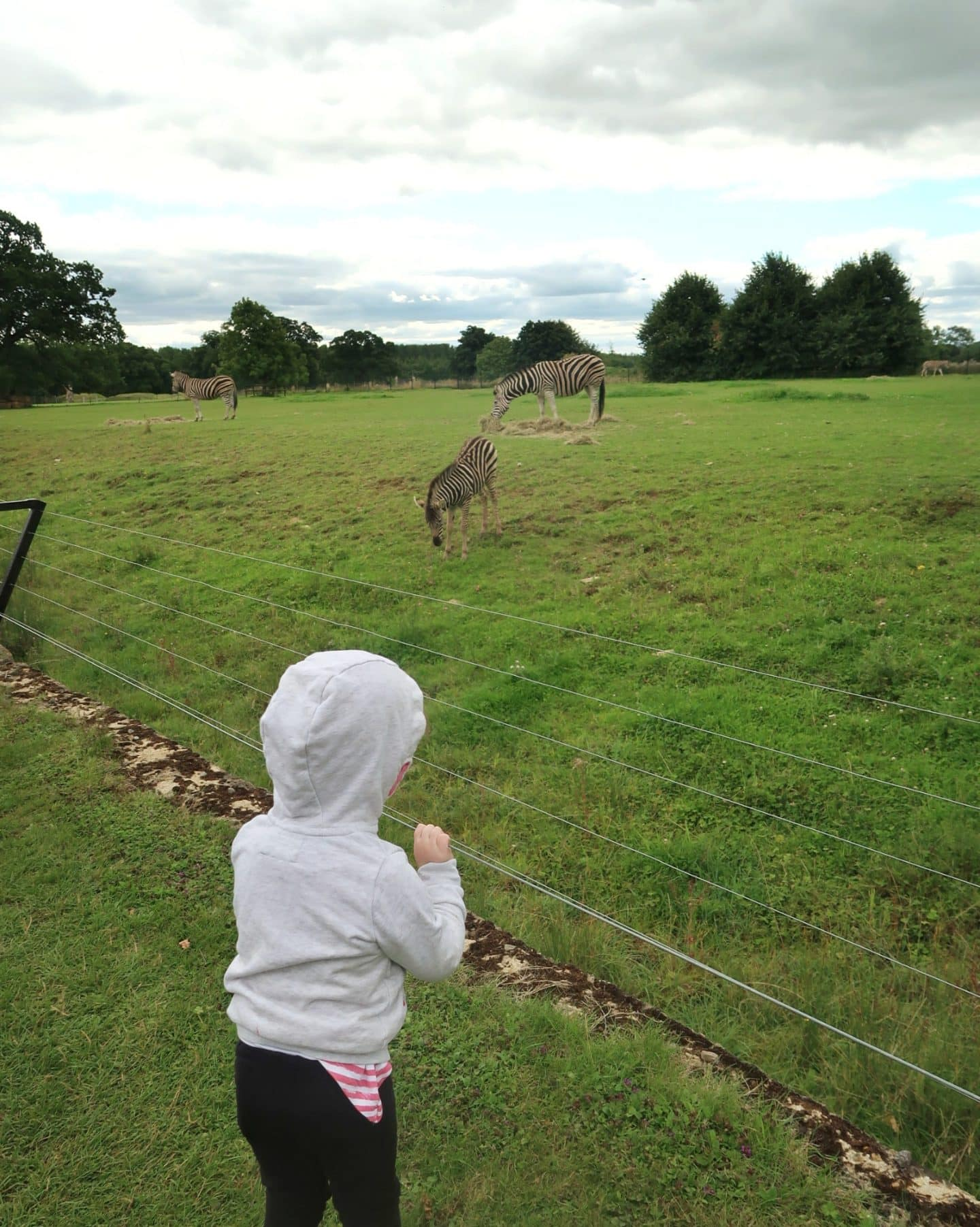 Zebras at Cotswold Wildlife Park
