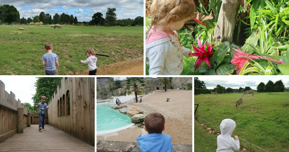 Cotswold Wildlife Park Review