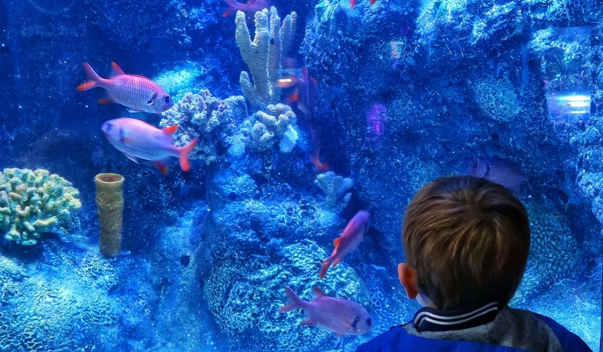 #nodulldays with Bassetts Vitamin feature - boy looking at a giant aquarium