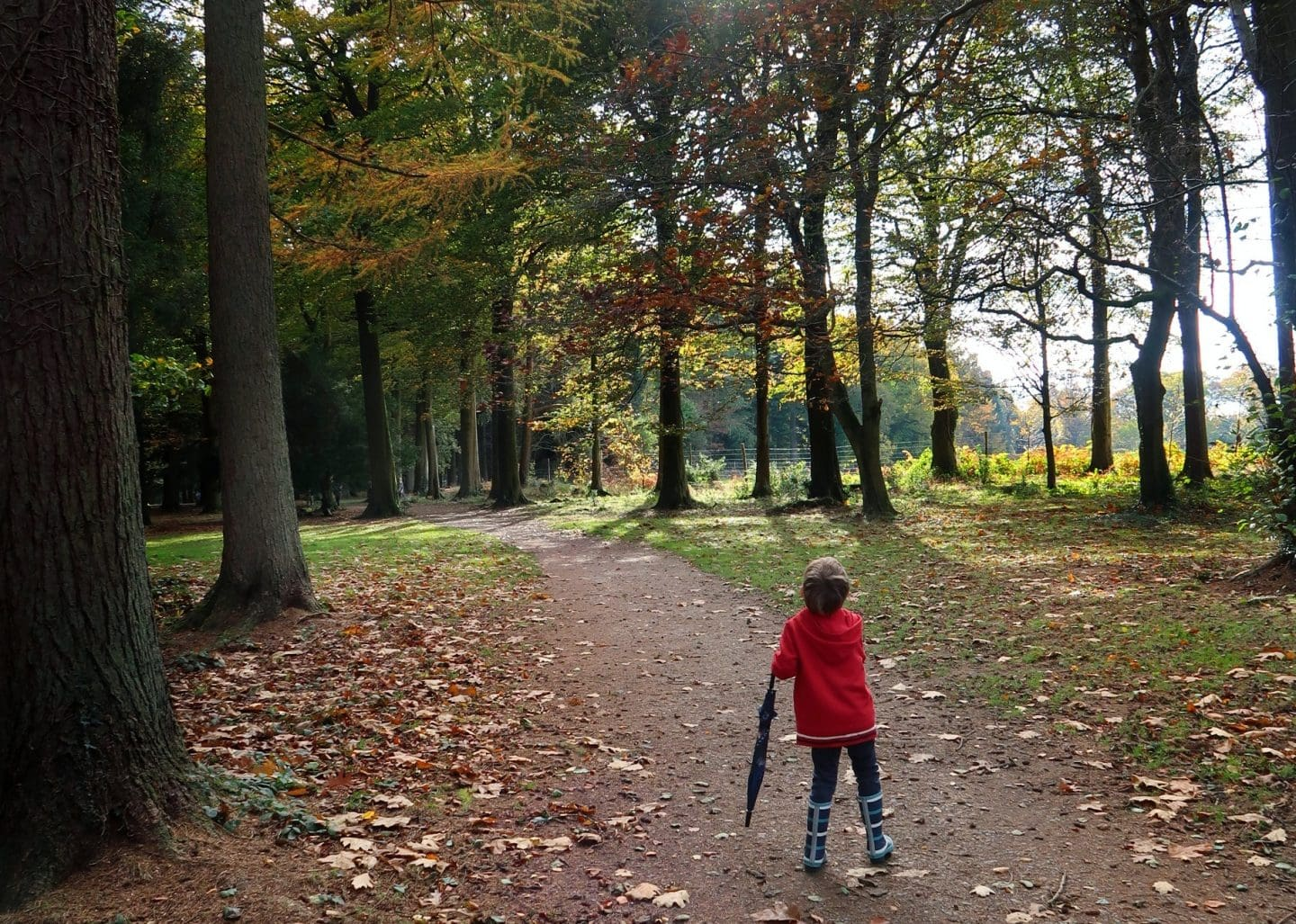 Little boy with an umbrella, facing away from the camera, walking in a forest.