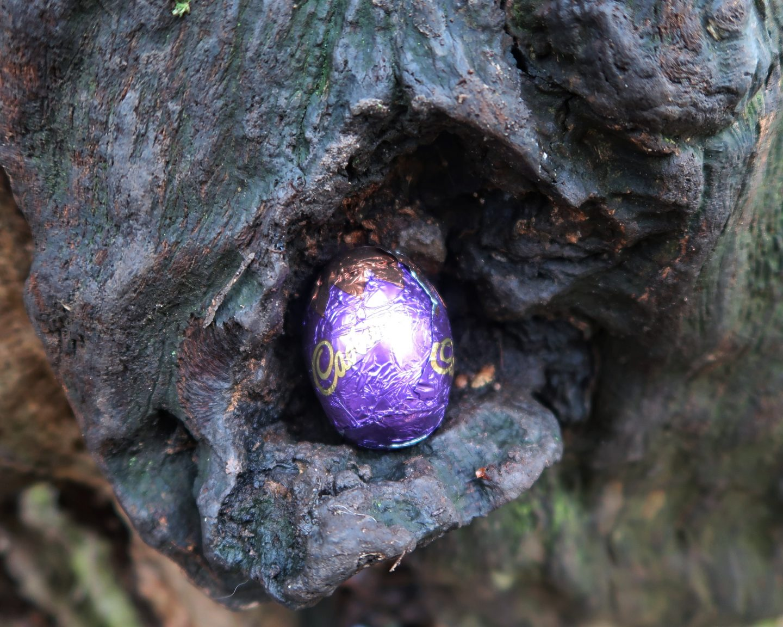 Cadbury Easter Egg hidden in nook of a tree log