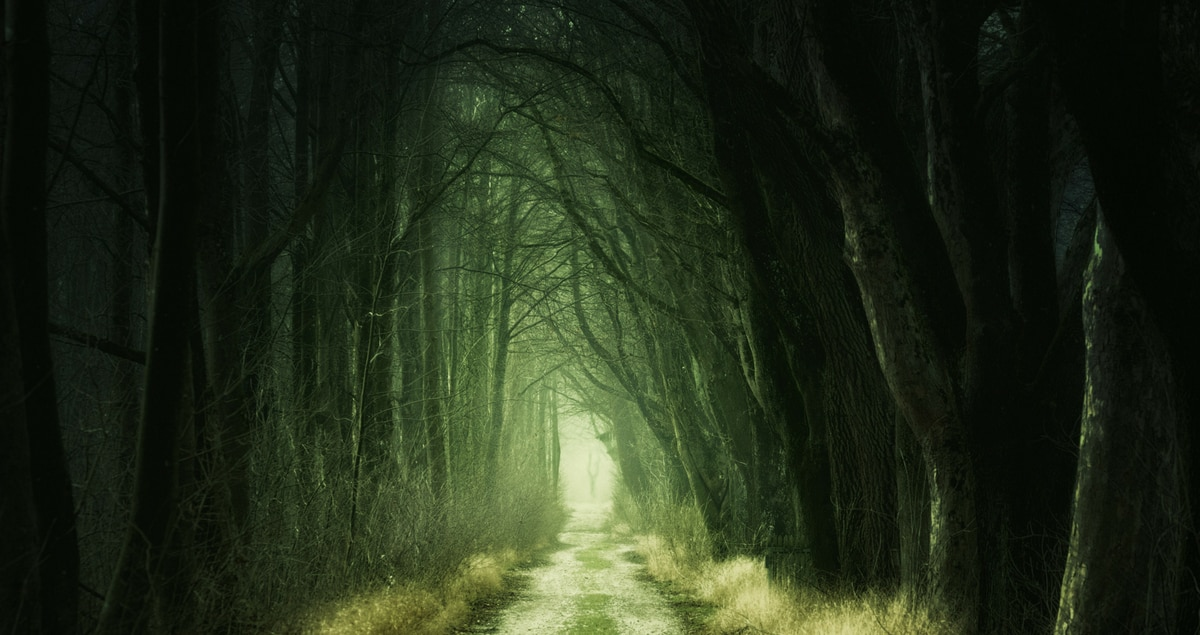 A dark path in a creepy wood