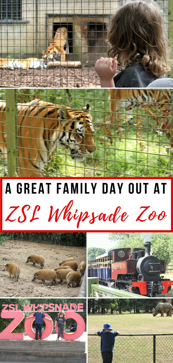 A great family day out at ZSL Whipsnade Zoo