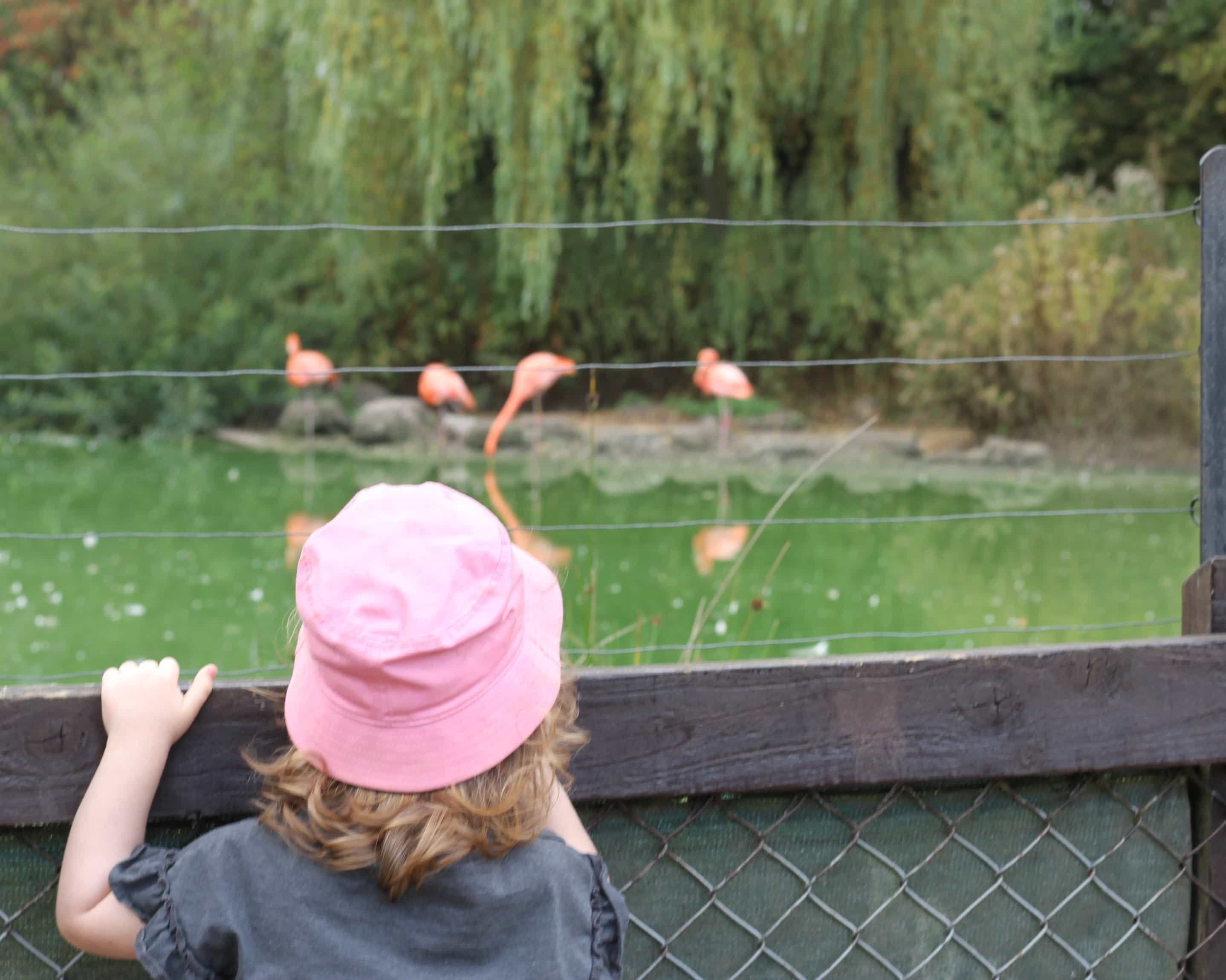 Littlest with the flamingos