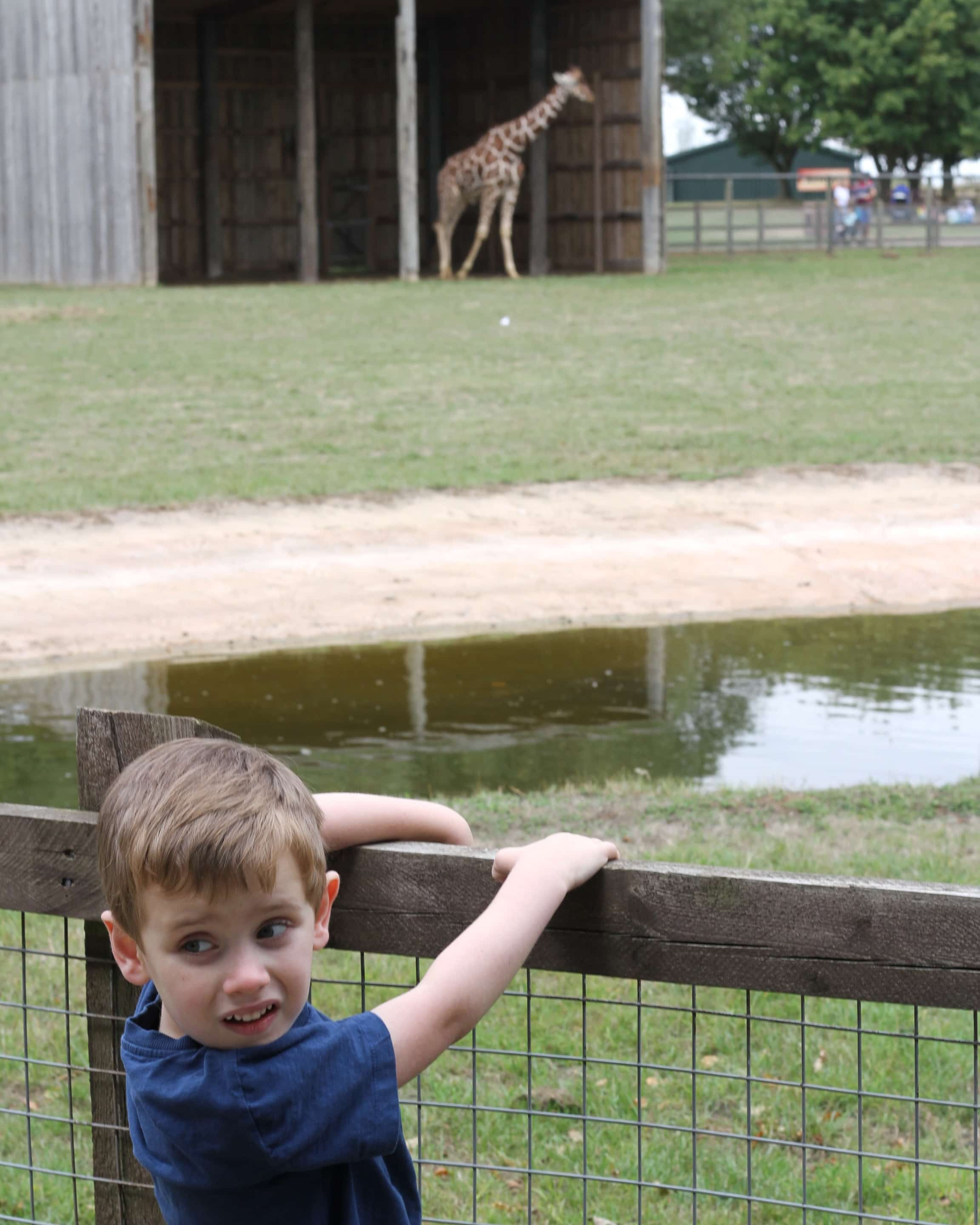 Biggest with giraffe