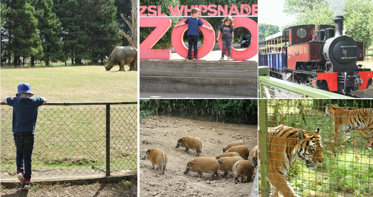 ZSL Whipsnade Zoo Feature - A collage of animals, the train and the entrance sign (1)