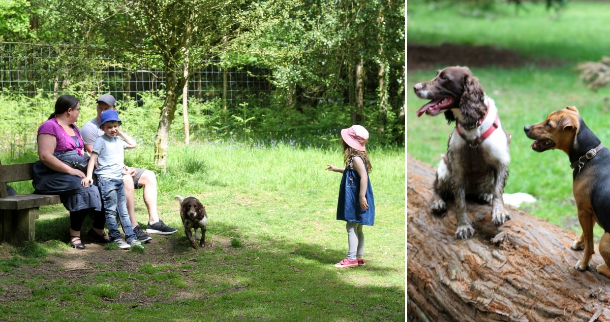 Family with dog on the left, muddy Springer Spaniel on a log on the right
