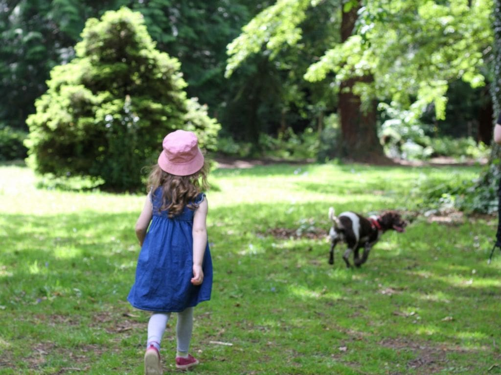 Small girl walking in a forest with a dog in the distance